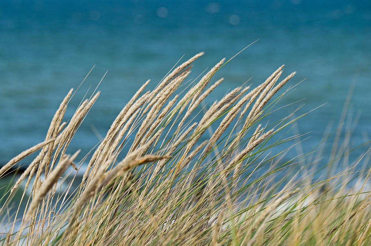 dune-grass-4457964_1280