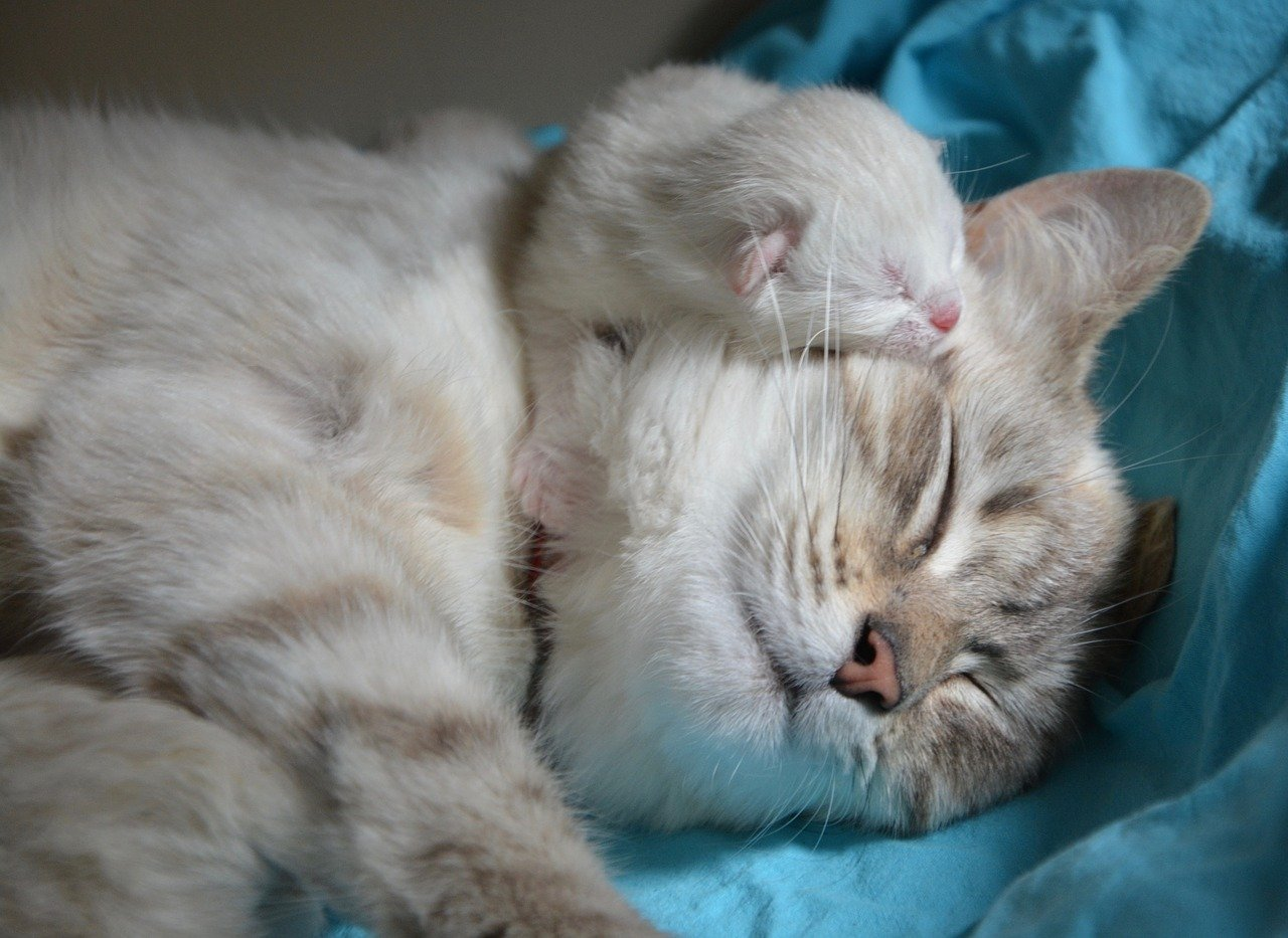 kitten-with-mom-2633283_1280