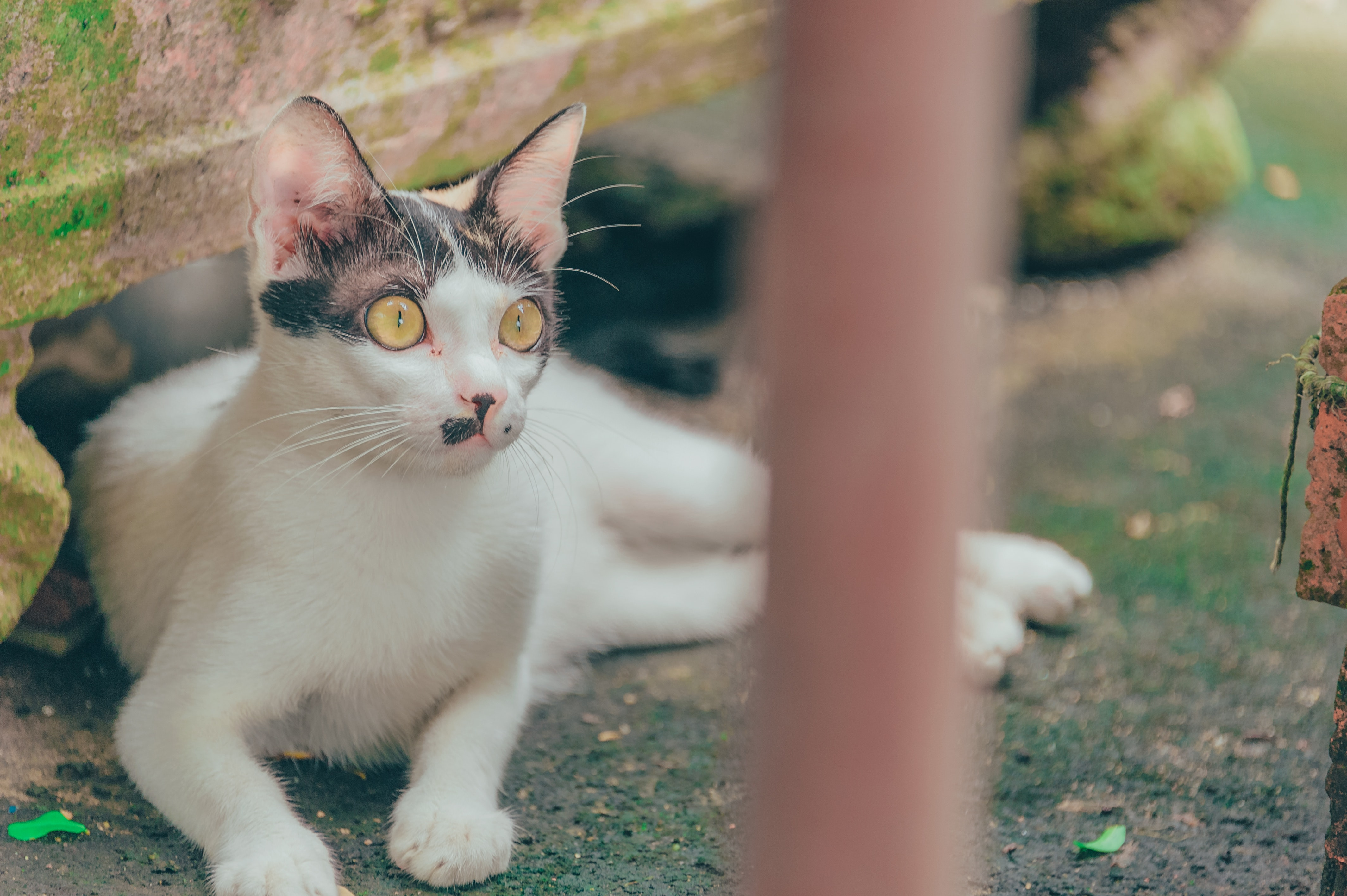 white-and-gray-cat-lying-on-mossy-ground-1441586