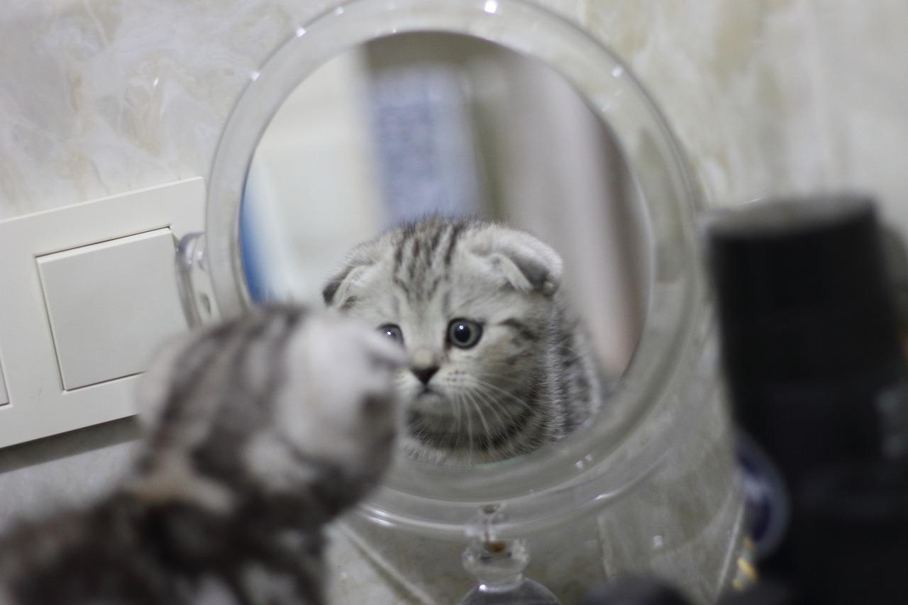 kot-w-lustrze